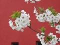 blossoms08_5