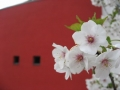 blossoms08_6