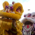 Chinese New Year Lion Dances